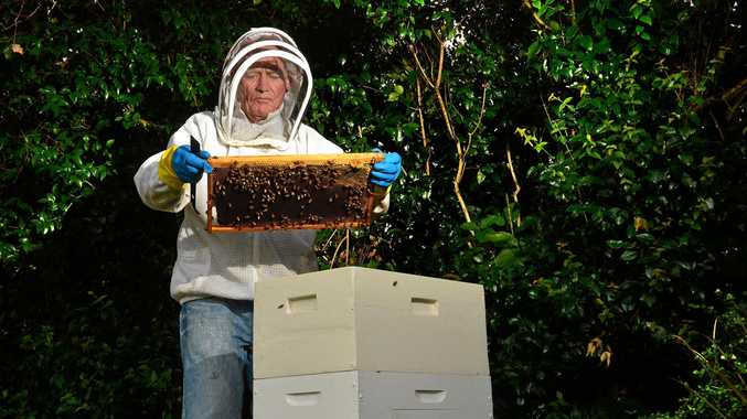 Sunshine Coast Beekeepers president Alby Taylor showing how it's done.