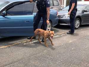 Dramatic rescue of a dog in Rocky CBD