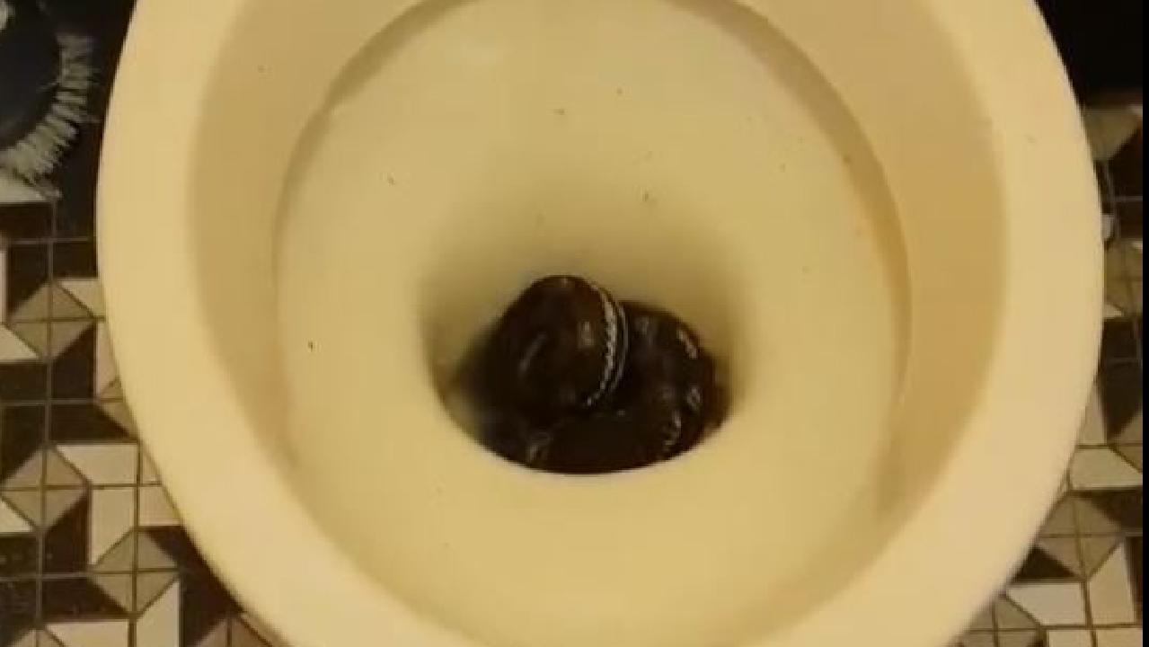 Carpet python found in toilet at Tarragindi home. Brisbane Snake Catchers