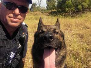 Meet the four-legged crime fighter tracking coast's most wanted