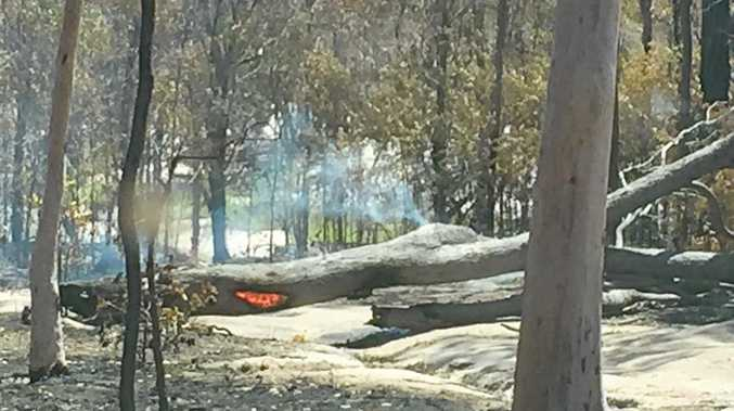STAY SAFE: A photo of a fallen tree posted on the Tannum Sands Rural Fire Brigade Facebook page on Thursday.