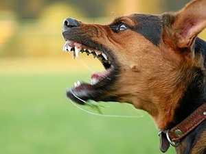 'Distressing' dog attack prompts council investigation