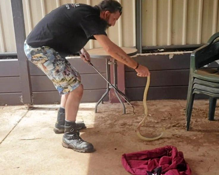 South Burnett Snake Catcher Christian Andersen catches a brown snake after its brush with two dogs on Friday February 1.