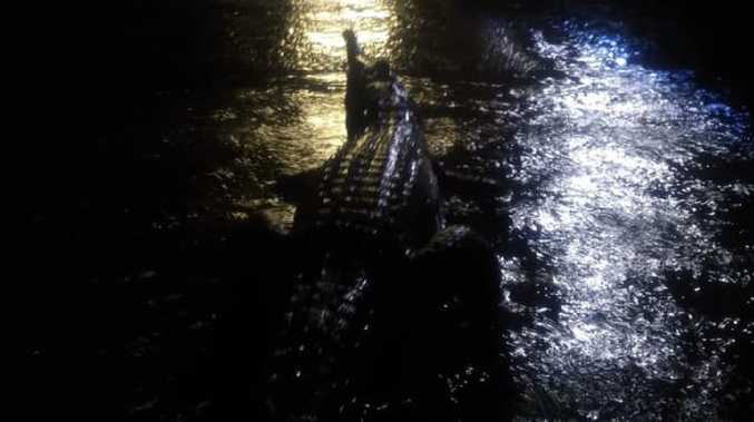 Freshwater crocodile spotted on O'Reilly St, Mundingburra on Sunday night in midst of Townsville floods. Picture: Supplied/Erin Hahn