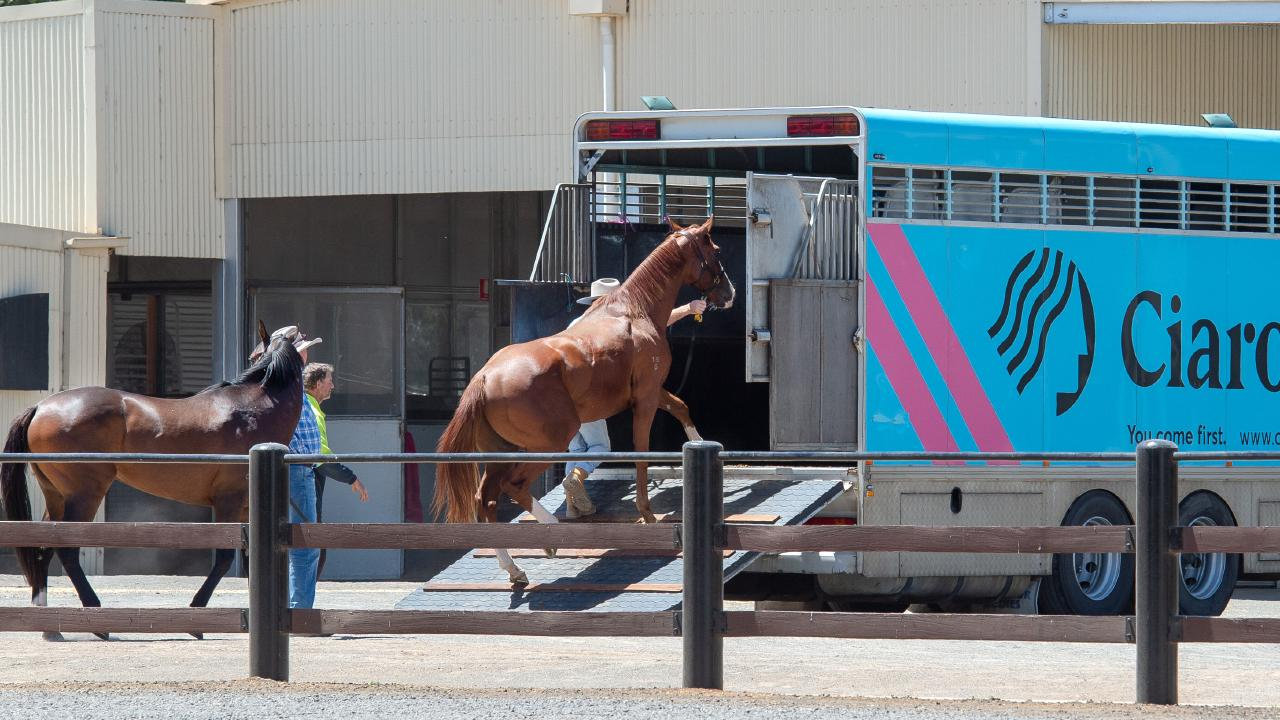 A float from Ciaron Maher stables taking horses away from Darren Weir's Miners Rest stables. Picture: Jay Town