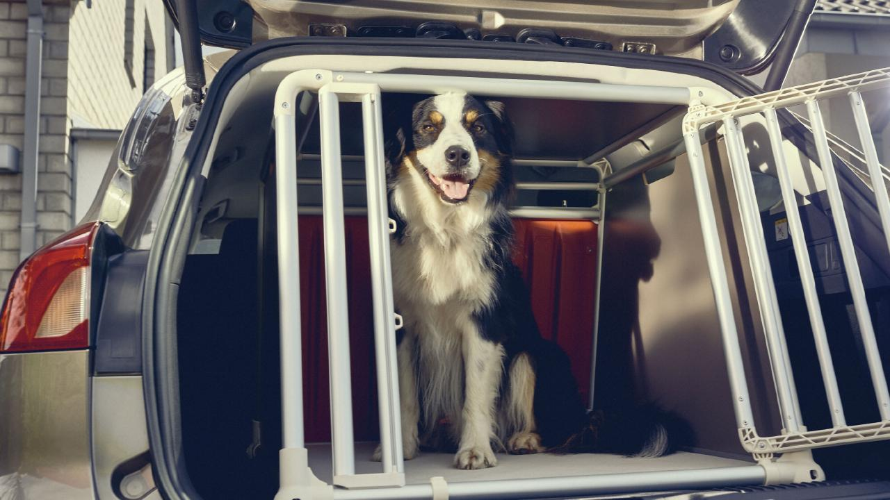 It is recommended that your pet be properly secured in your vehicle.