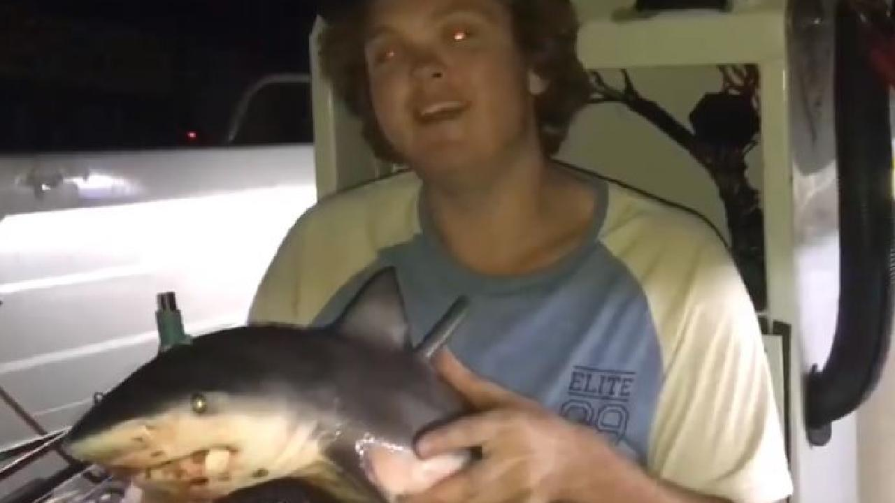 The group has defended the footage, saying the shark was already dead.