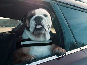 Costly mistake dog owners could make when jumping in the car