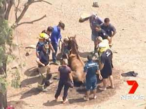 Firefighters called for horse in sticky situation