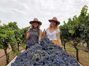 Hot, dry summer makes for extra-sweet port