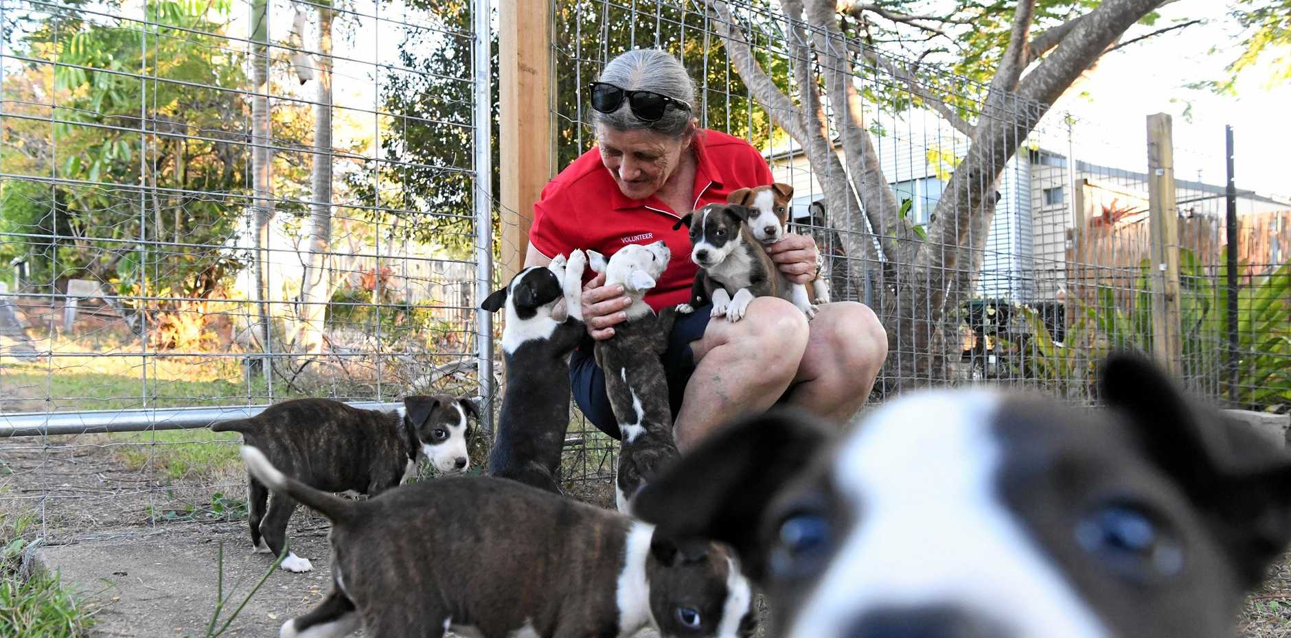 RESCUE PUPS: Red Collar Rescue volunteer Anne Maree Peachey with the rescued puppies.