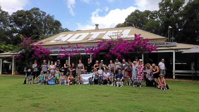 BEST FRIENDS: The schnauzer picnic at the Apollonian Hotel attracts up to 60 dogs.