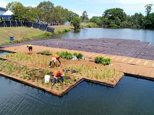 Floating island built to clean up lake