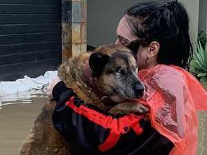 Incredible efforts to rescue pets, wildlife