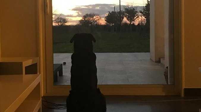 Emiliano Sala's dog is heartbroken.
