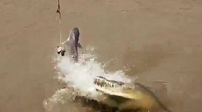 Screenshots from Jonathan Kehler's video shows a croc that is about to chow down on a feed get attacked by shark on the Adelaide River. Picture: Supplied