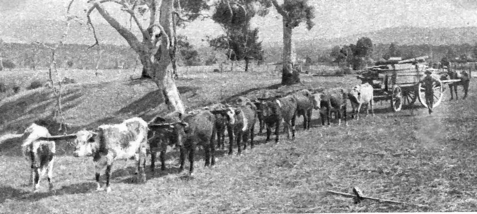 William Alexander drove his bullock team into the west while his wife operated the Kogan Hotel.