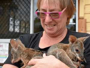 Safe haven for region's joeys in small town of 28