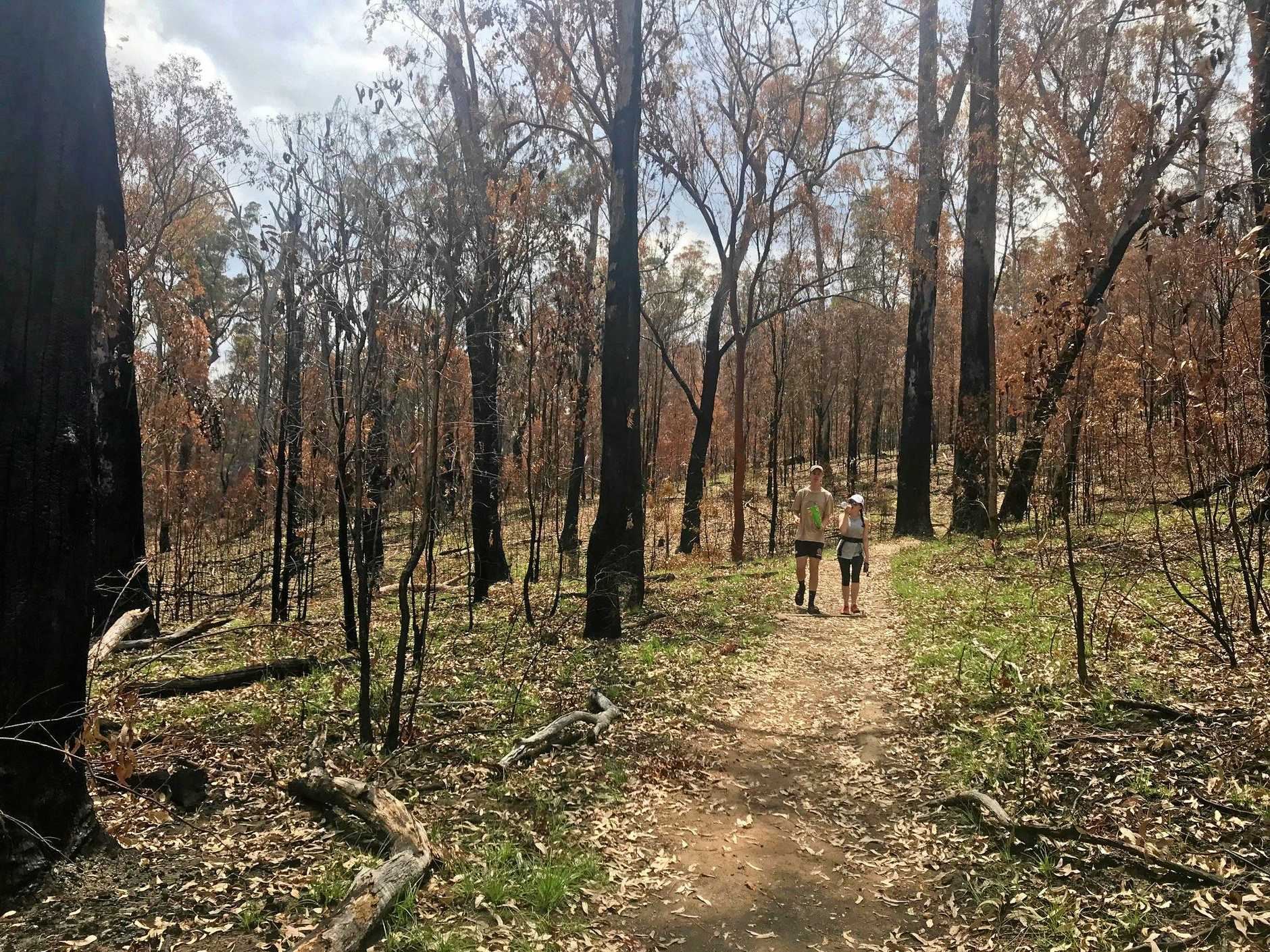 AFTER THE FIRES: The regrowth and renewal begins.