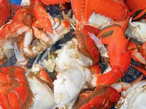 Humble spanner crab blamed for life of crime