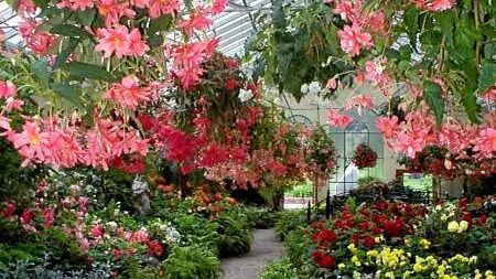 COLOURFUL: The Queensland Begonia Society is set to host its 2019 show.