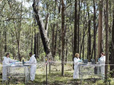 Colloquially known as the 'body farm', researchers use human donors to study decomposition in the Australian environment. Picture: Anna Zhu