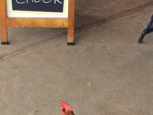 Hen snapped in front of a 'takeaway chook' sign