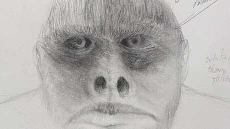 A work in progress sketch by artist Buck Buckingham based on witness descriptions of the Yowie.