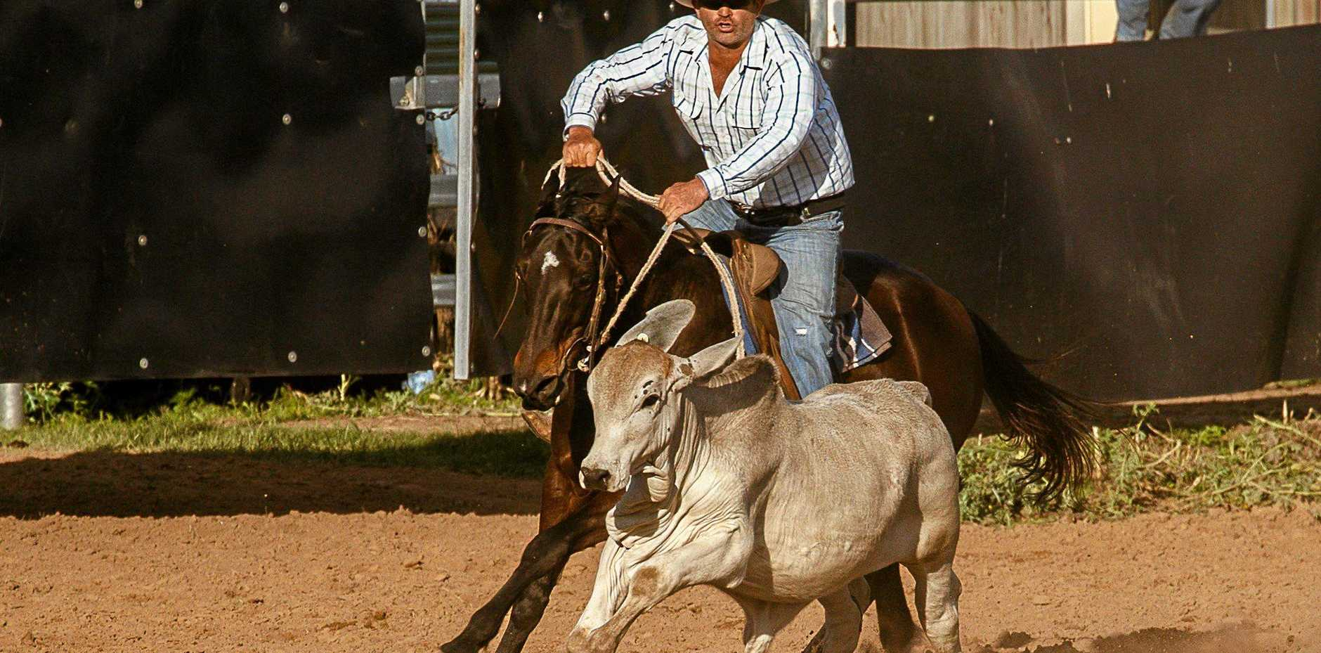 GIVING CHASE: Billy-Jo Rea, from Marlborough, chases some cattle at the Nebo Ambulance Campdraft.