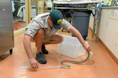 Australia Zoo rehabilitates injured animals.