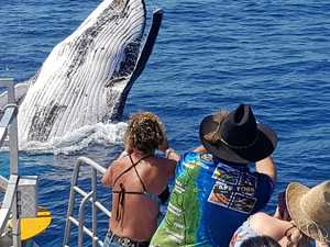 GALLERY: Whales put on a show at the Keppels on last day