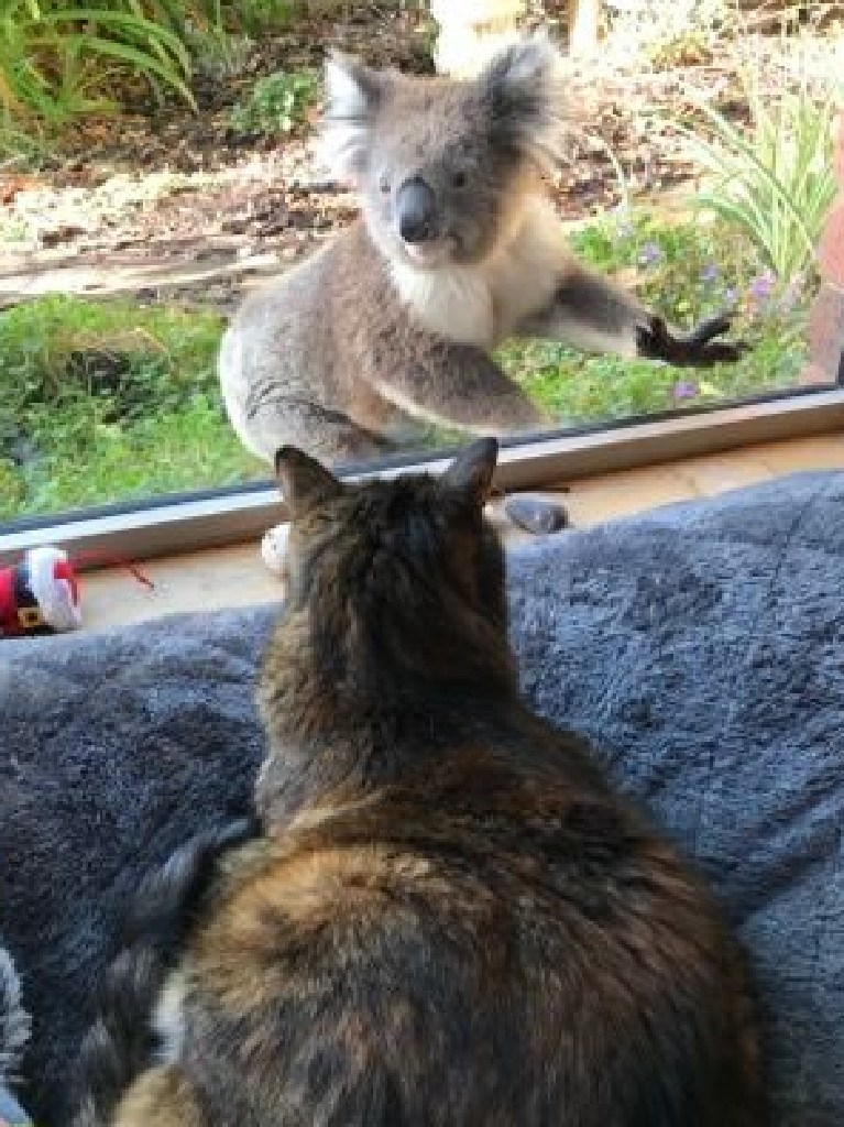 The furry friend liked the cat so much he came back for another visit. Picture: Jo Isbel