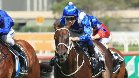 Winx could run against nine of her stablemates. Picture: Getty