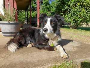 GALLERY: 74 of Gympie region's cutest dogs