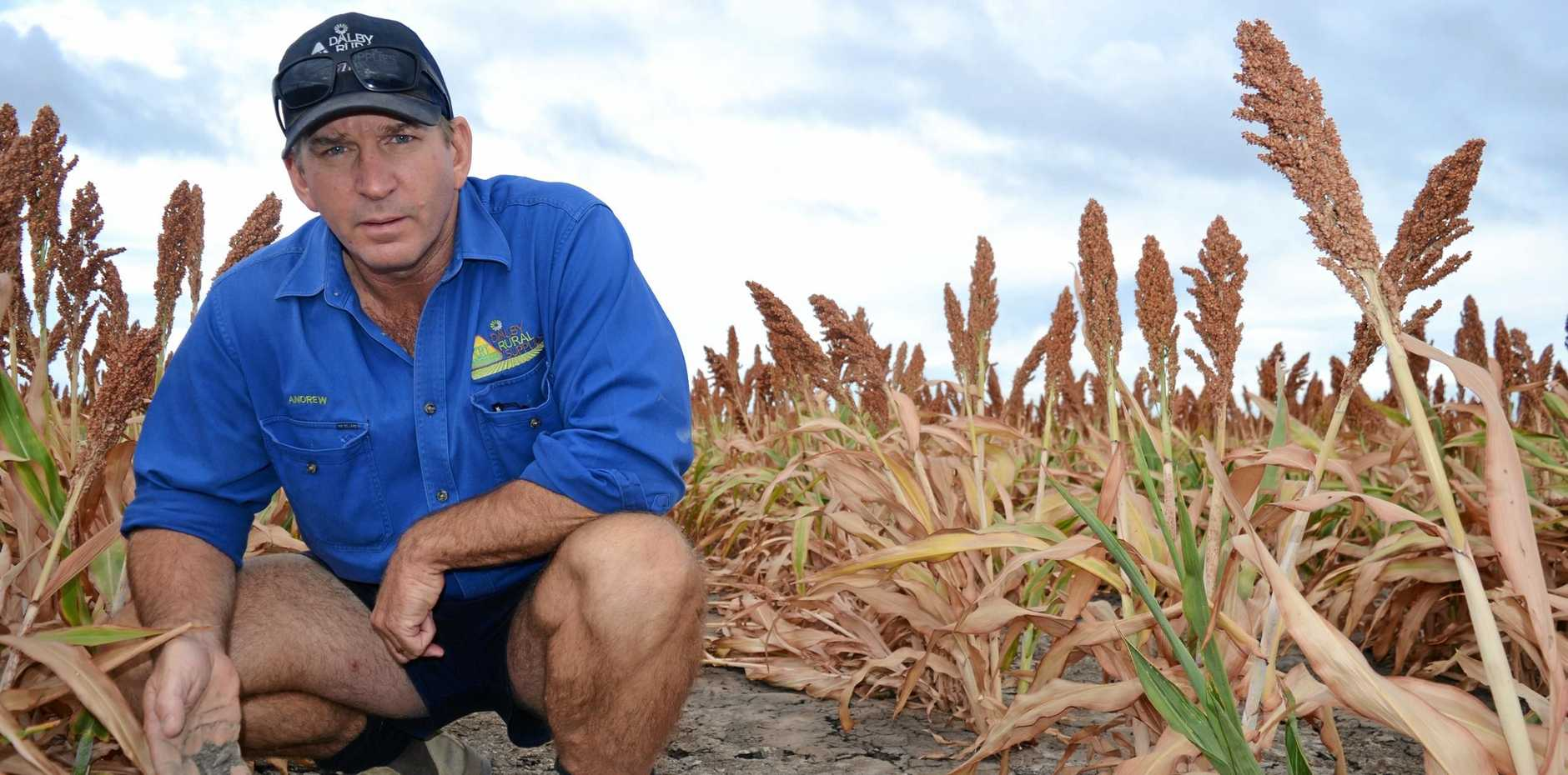 TOUGH TIMES AHEAD: Farmers are facing a fight against the weather as some crops desperately require rain while others need the rain to hold off.