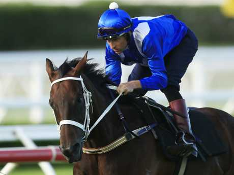 Winx-mania is set to grip the nation one last time. Picture: Getty