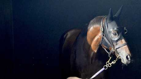 Winx is embarking on her final campaign. Picture: AAP
