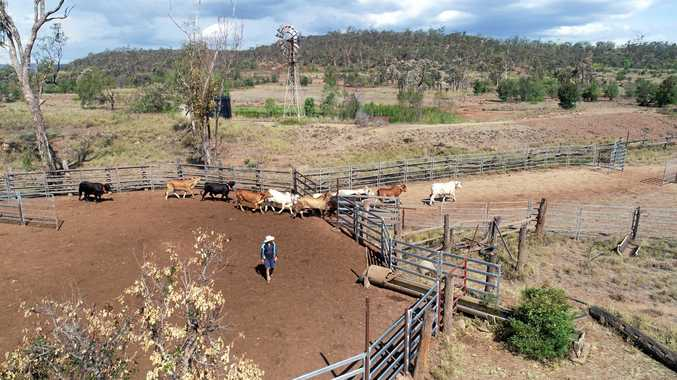 Peabody Australia is the first miner to use Agersens' innovative eShepherd collars in their cattle grazing trials on rehabilitated land.