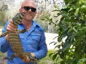 Snake catcher's close encounter with angry goanna