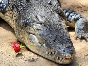 'Everyone should make love like crocodiles'