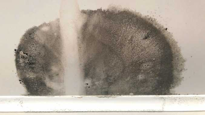 LIFE IN THE TROPICS: Residents throughout the Whitsundays are getting ready to tackle the annual problem of mould.