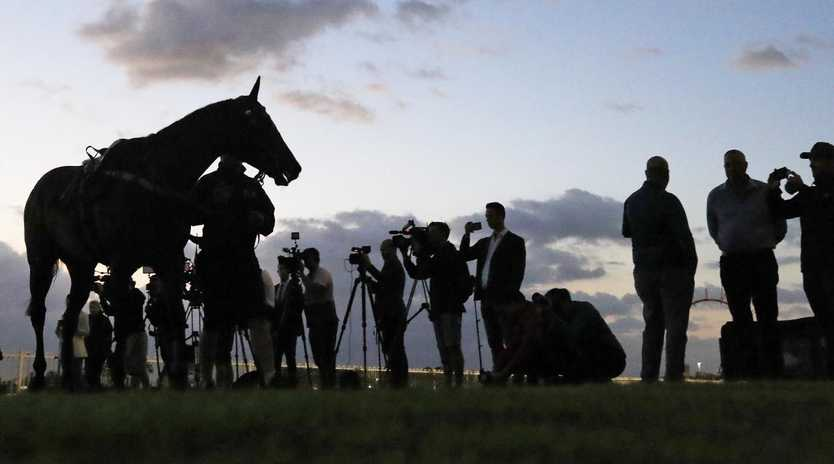 Winx parades in front of the media after a trackwork session at Rosehill. Picture: Getty Images