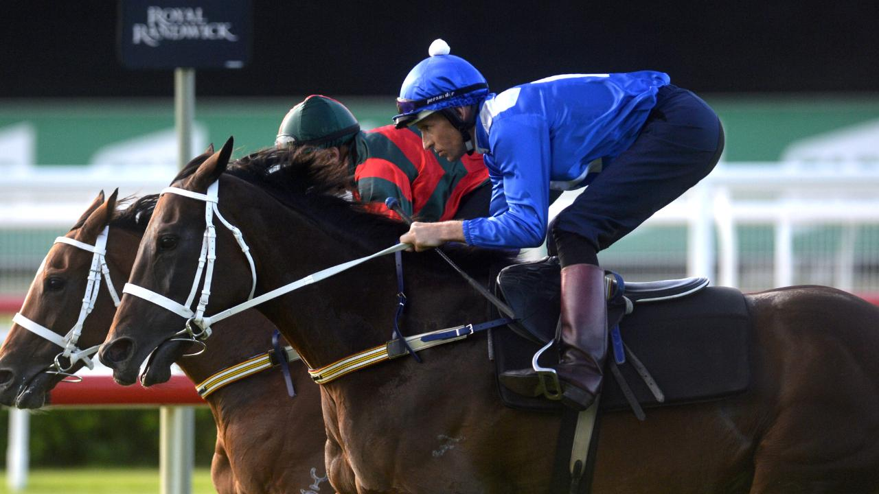 Winx still has the desire to race. Picture: AAP