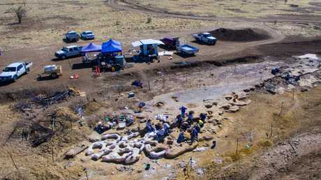 Excavation teams have discovered gigantic Sauropod tracks near Winton, in western Queensland.