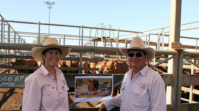 Outstanding price for quality charity cattle