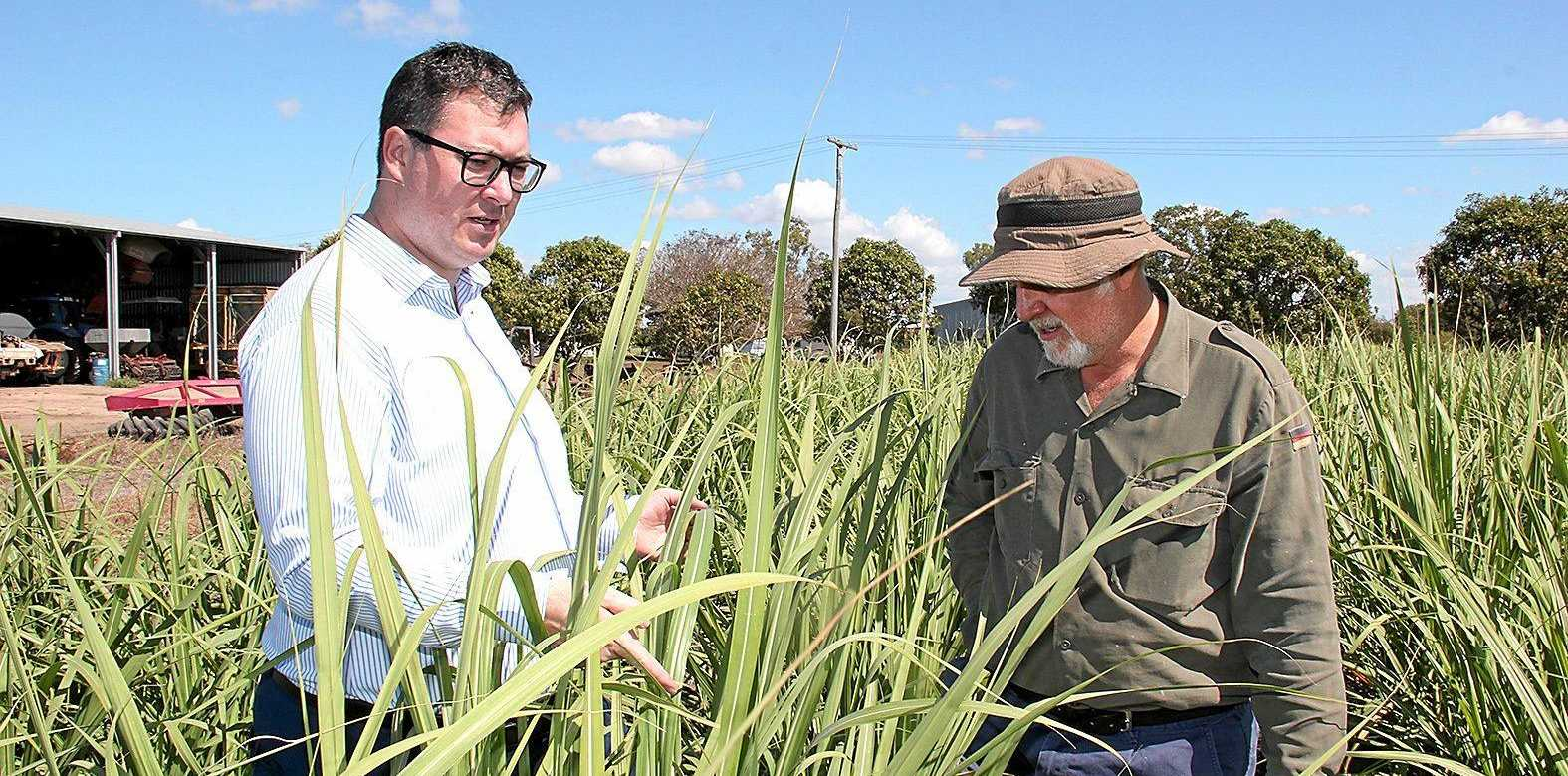 Member for Dawson George Christensen with cane farmer Phil Marano.