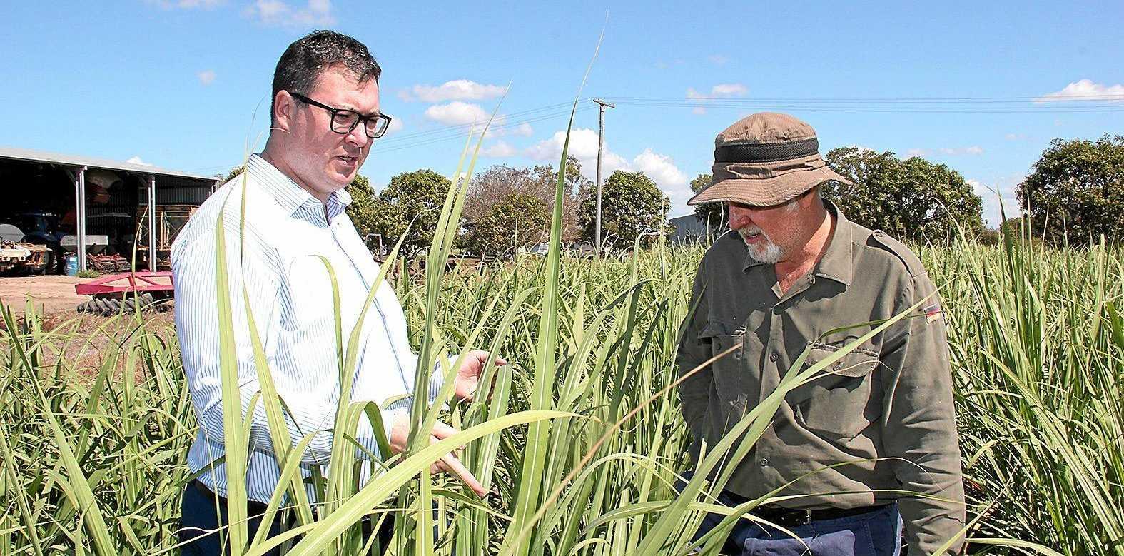 Member for Dawson George Christensen with cane farmer Phil Marano.