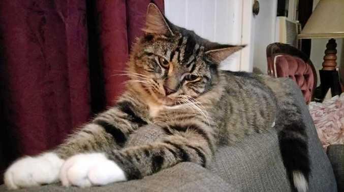 PHOTOS: 50 of Bundaberg's most photogenic felines