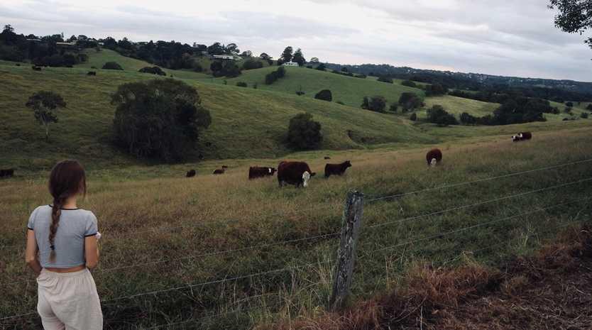 Cows roaming free. Source: Grace Purvis
