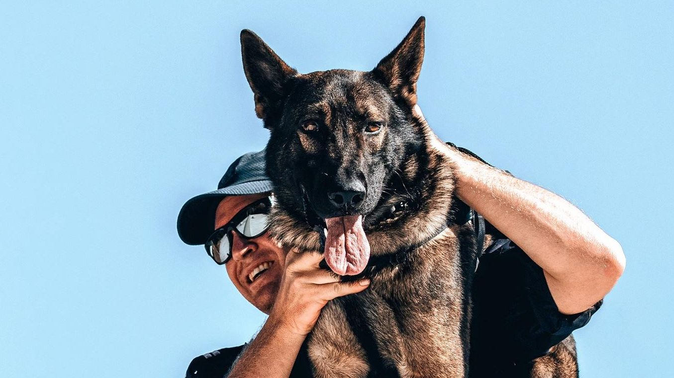 FOND FAREWELL: Senior Constable Trent Reynolds with his new police dog Darth, the son of the Coast's best police dog Oakley. Below: Police dog Oakley, who was feared by criminals and loved by his family.